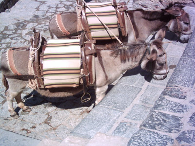 Poor mistreated donkeys at Lindos, Rhodes